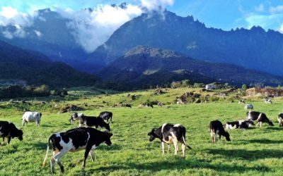 KK – Kundasang – 3D2N CITY TOUR